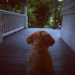 porchdog